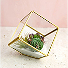 "Wedding Decor Rentals Item ""Brass Terrarium"" by Party Mood."